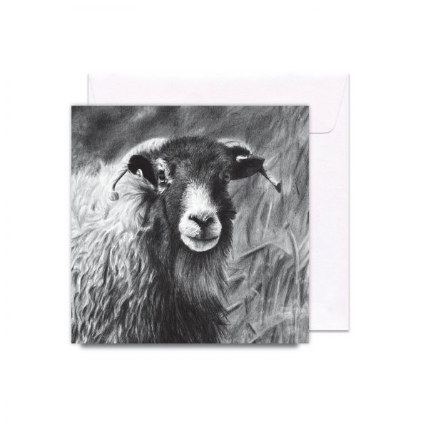 034SwaledaleSheep