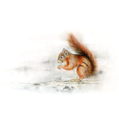 196SusieSquirrel 3