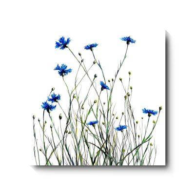 321CornflowersSQCanvas