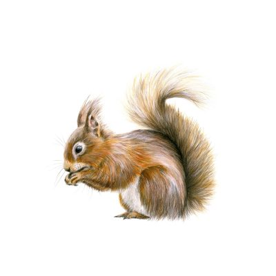 362SquirrelAway