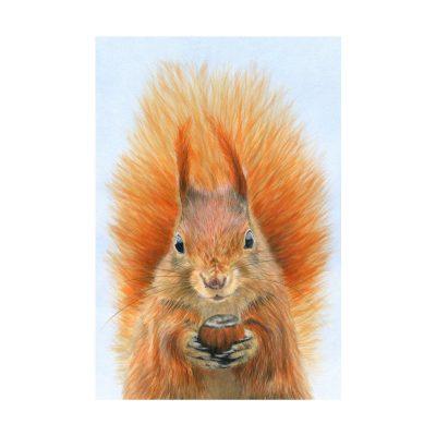 387RedSquirrel