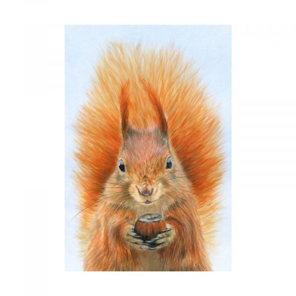 387RedSquirrel